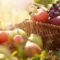 fructele de toamnă